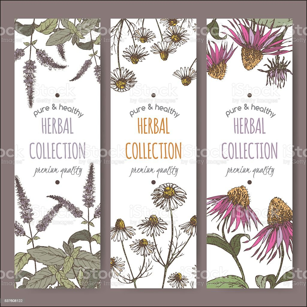 Three color vector herbal labels with peppermint, chamomile and echinacea vector art illustration