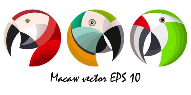ilustrações de stock, clip art, desenhos animados e ícones de three colorful macaw parrot`s heads, vector illustration - arara