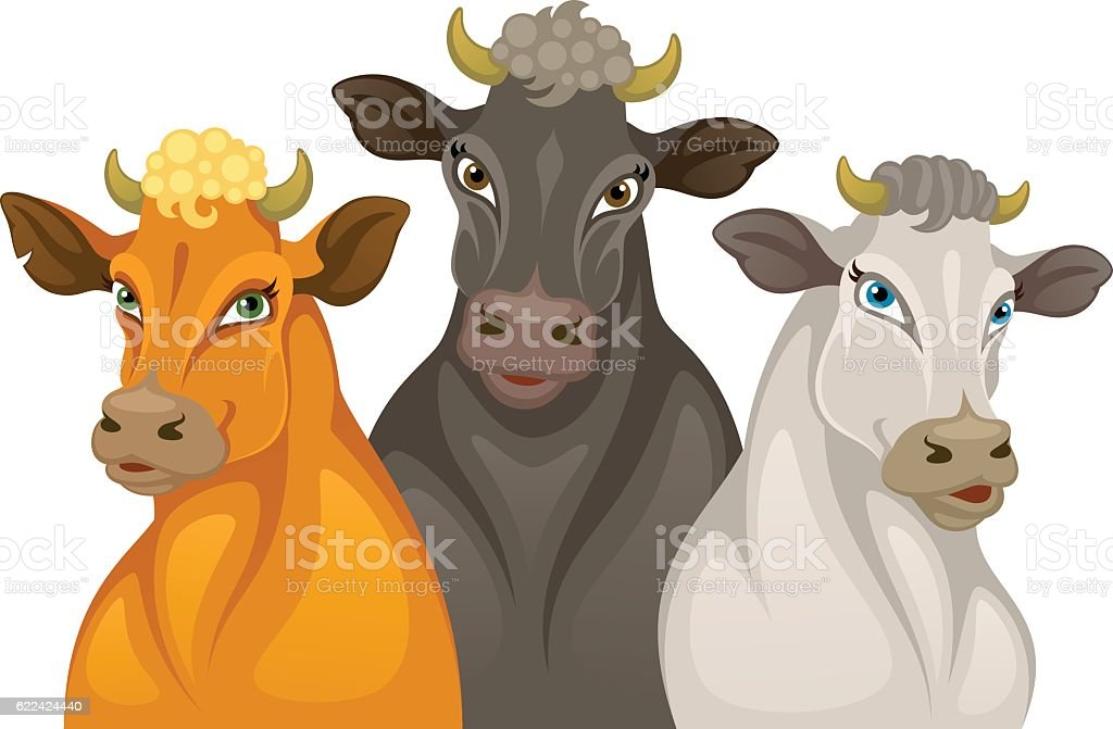 Three cows vector art illustration