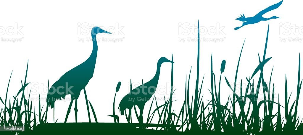 Three crowned cranes in a marshy area with one flying vector art illustration