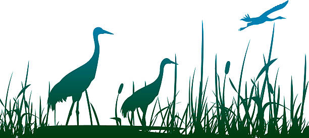 three crowned cranes in a marshy area with one flying - crane bird stock illustrations