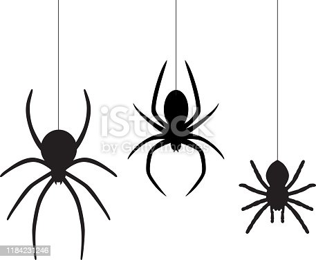 Vector illustration of three black dangling spiders on a white background.