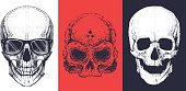 Three different skulls