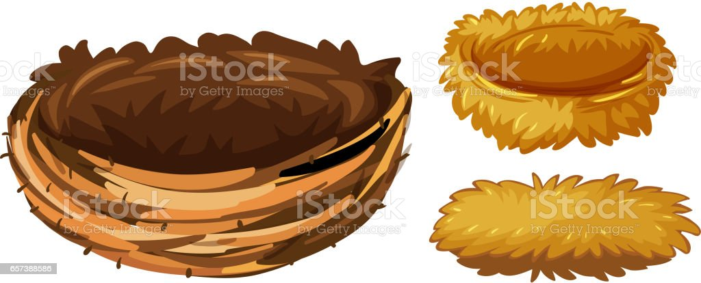 Three different types of bird nests vector art illustration