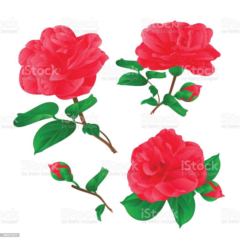 三朵茶花花與芽復古手畫向量 免版稅 三朵茶花花與芽復古手畫向量 向量插圖及更多 夏天 圖片