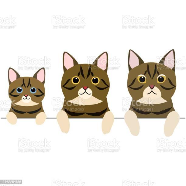 Three generations of short hair cats border vector id1162264656?b=1&k=6&m=1162264656&s=612x612&h=sh1eer kpa1dtcbiavw2qsnwo7ltqbsmzopwbbbym g=
