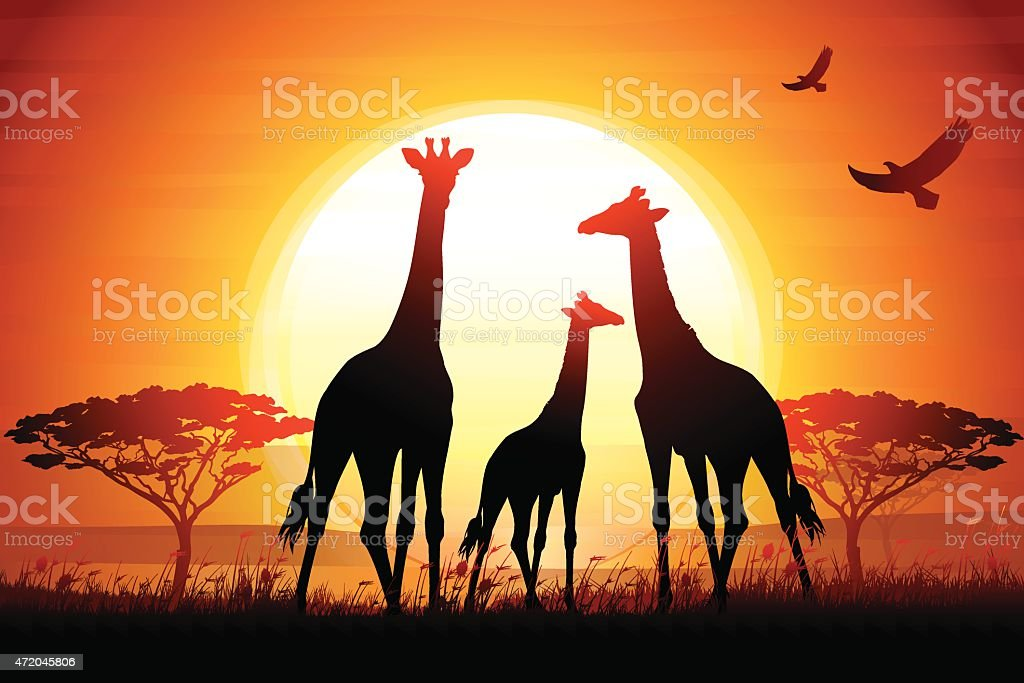 Three Giraffes silhouettes safari in savanna against hot sun vector art illustration