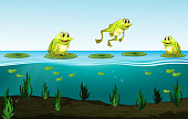 Three green frogs on water lily