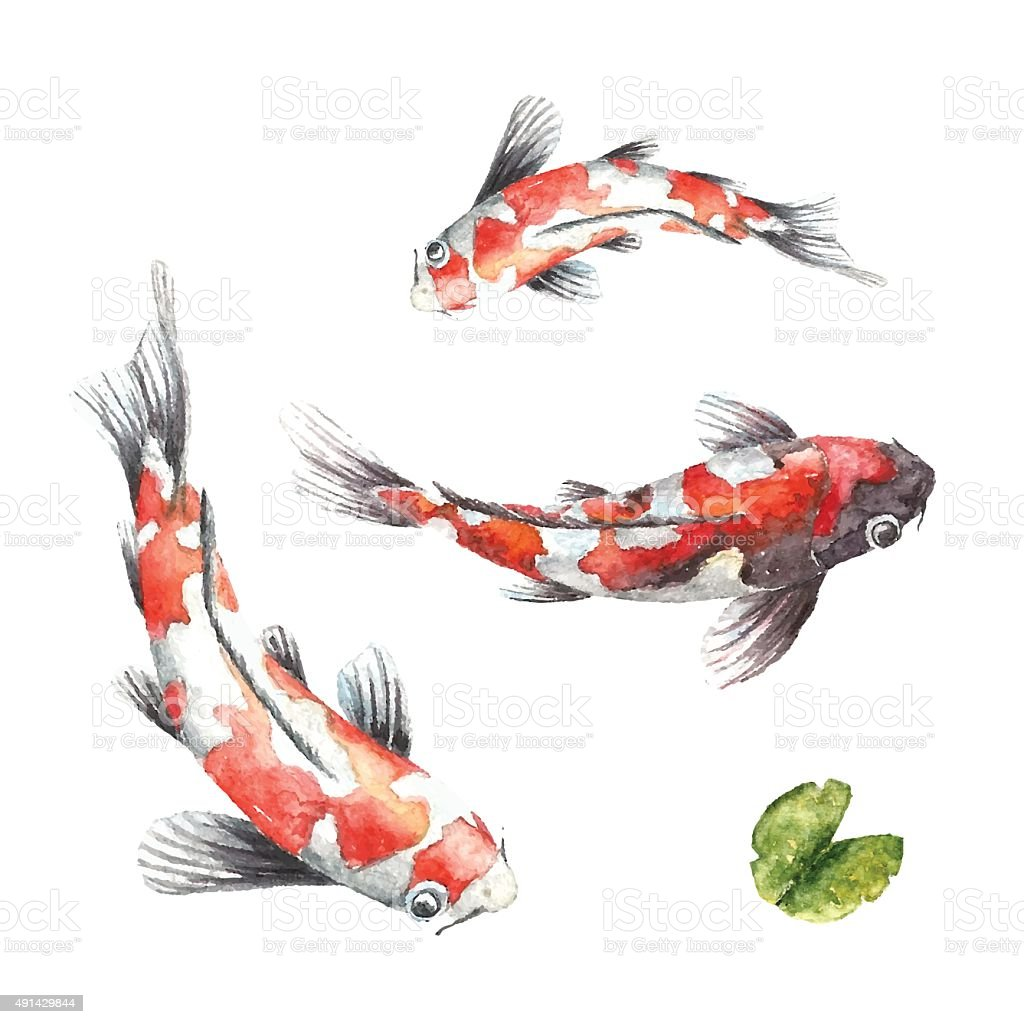 Three Koi Fish On White Background Stock Illustration Download Image Now Istock