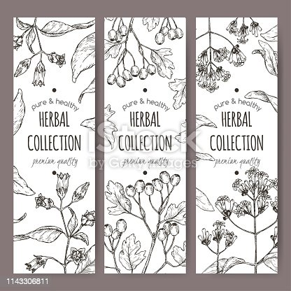 Three labels with Atropa belladonna aka belladonna, Cinchona officinalis aka quinine and Crataegus monogyna aka common hawthorn sketch. Green apothecary series.