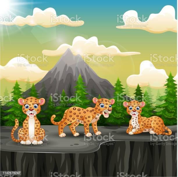 Three leopard cartoon enjoying on the mountain a cliff vector id1142175247?b=1&k=6&m=1142175247&s=612x612&h=dz d 9yh2ychxdbnx3hzq ywxeooxuwcnnnfrctibwi=