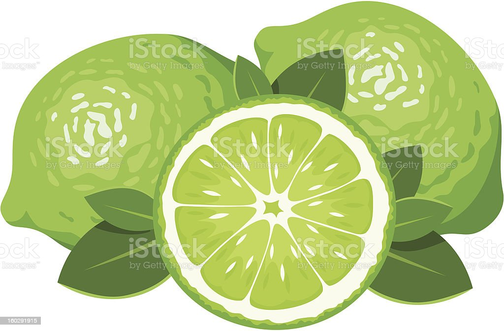 Three limes isolated on white. Vector illustration. royalty-free stock vector art