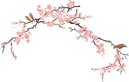Three Little Birds Perching and Cherry Blossoms Branches