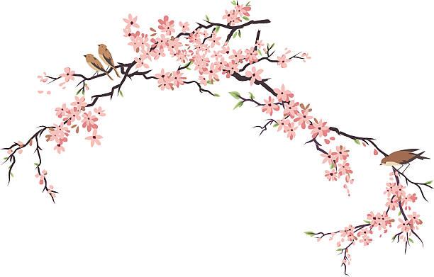 trzy małe ptaki gnieździć się i wiśniowymi kwiatami oddziałów - gałąź część rośliny stock illustrations