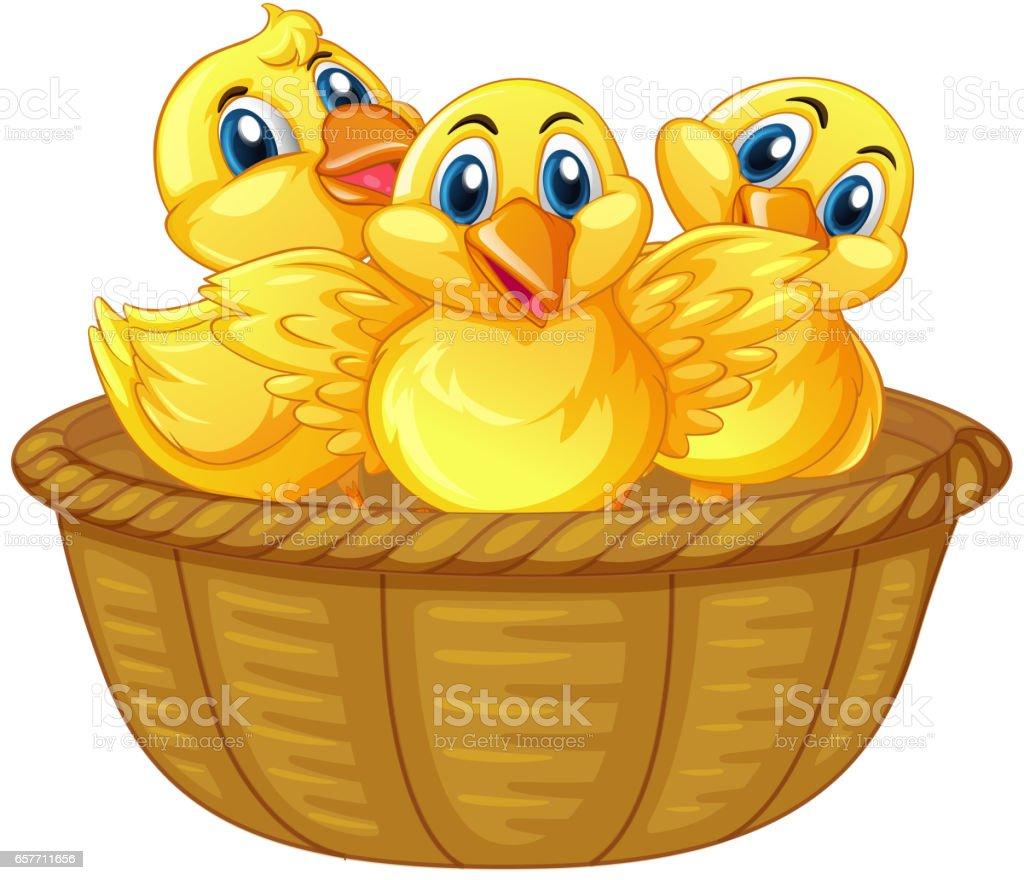 Three little chicks in basket vector art illustration