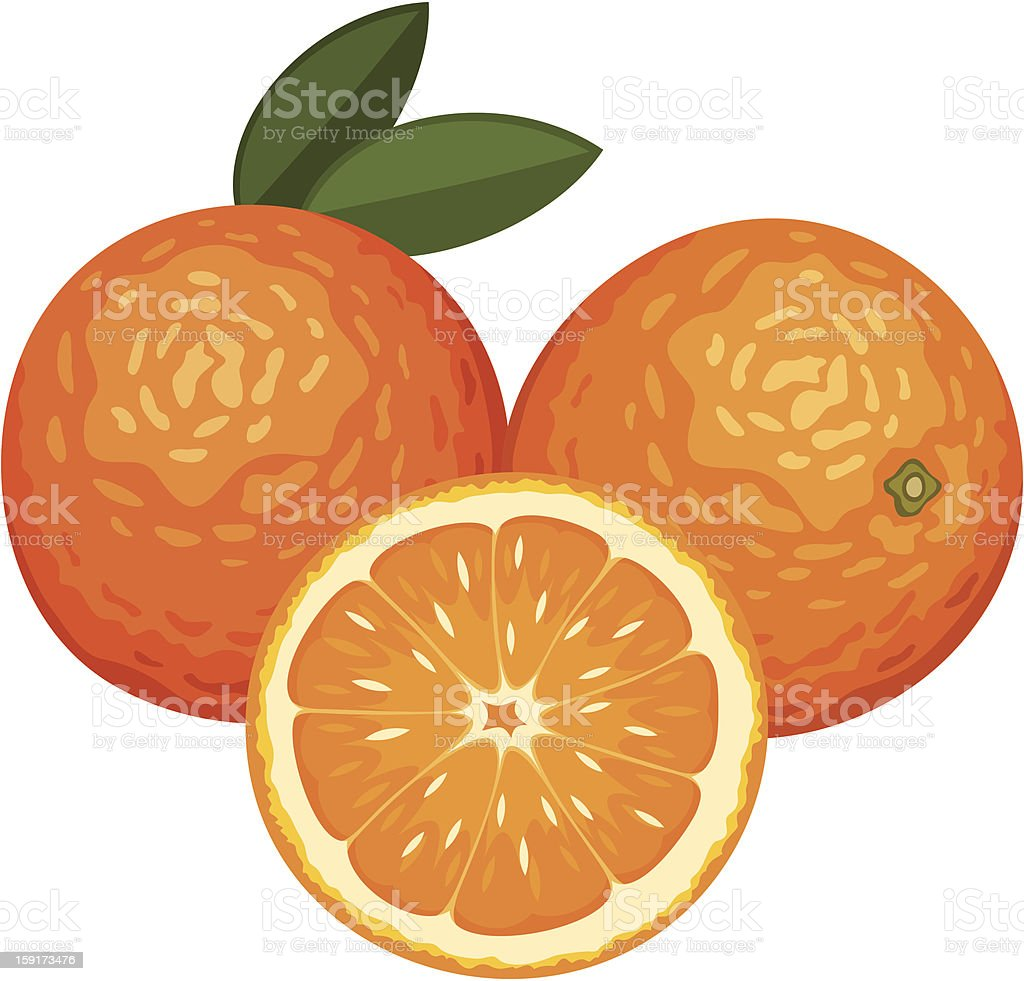 Three oranges isolated on white. Vector illustration. royalty-free stock vector art