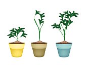 Environmental Concept, Illustration of Fresh Ornamental Green Trees and Plants in Terracotta Plant Pots for Garden Decoration.