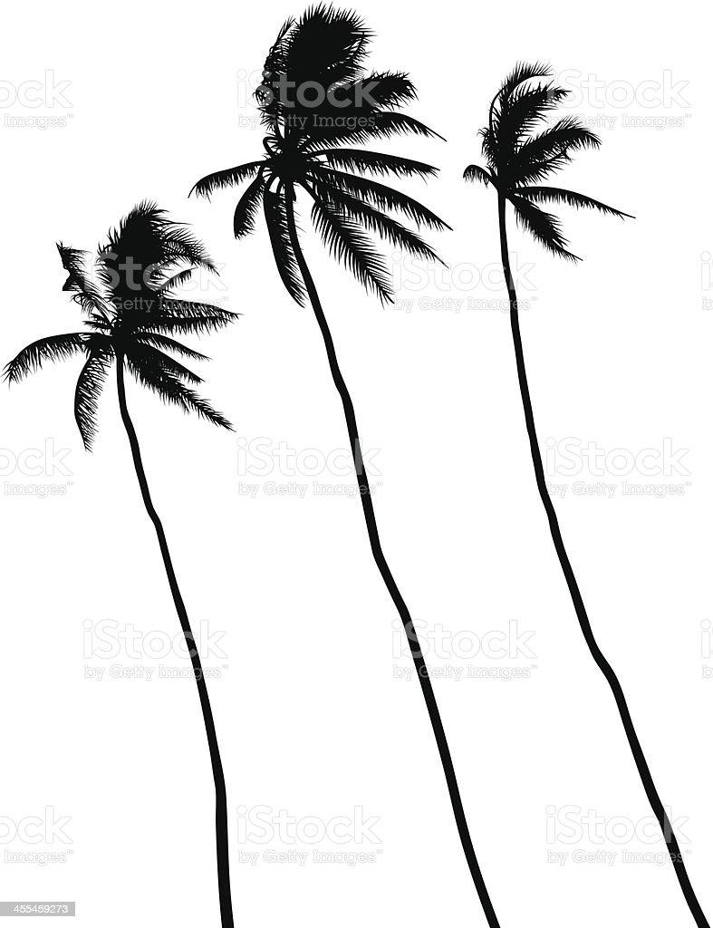 Three palms vector art illustration