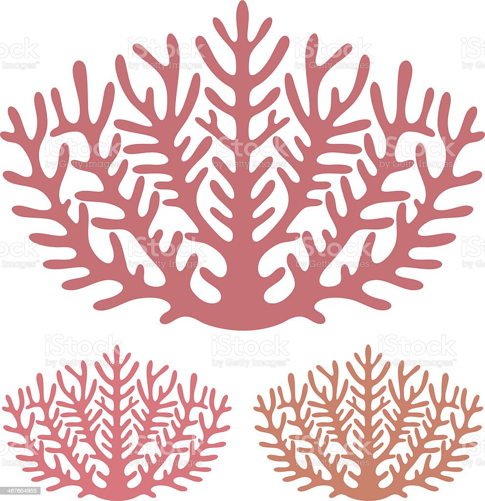 Three pink scale coral illustrations vector art illustration