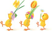 Vector illustration of 3 baby chicks marching like soldiers with spring flowers in their hands. Layered file. Each flower is grouped as well as each baby chick.
