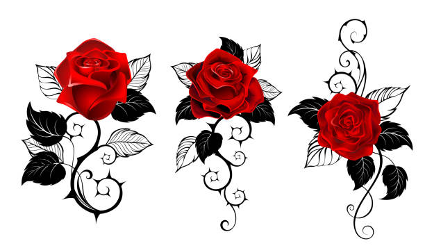 Three red roses for tattoo Three artistically painted red roses with black spiny stems and black leaves on white background. Tattoo style. sharp stock illustrations