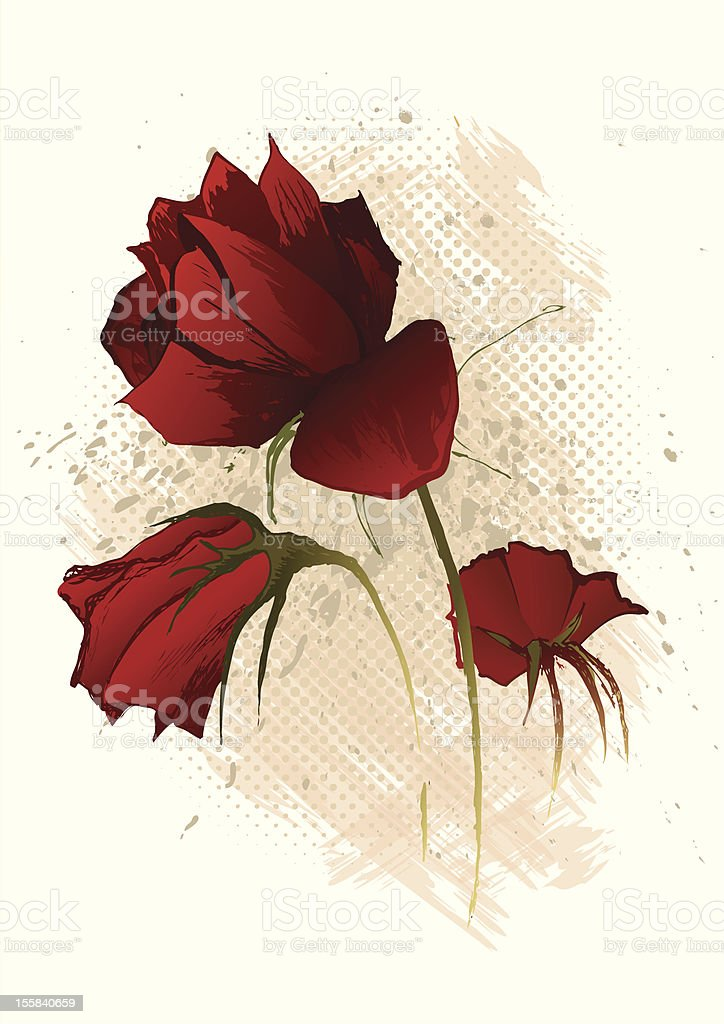 Three red roses. royalty-free stock vector art