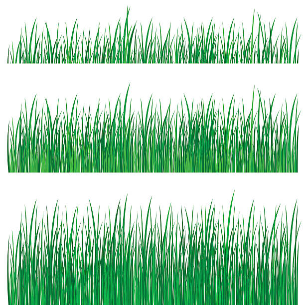stockillustraties, clipart, cartoons en iconen met three rows of grass of different lengths - grasspriet