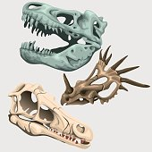 Three skulls of ancient large animals, vector image collection for your design needs