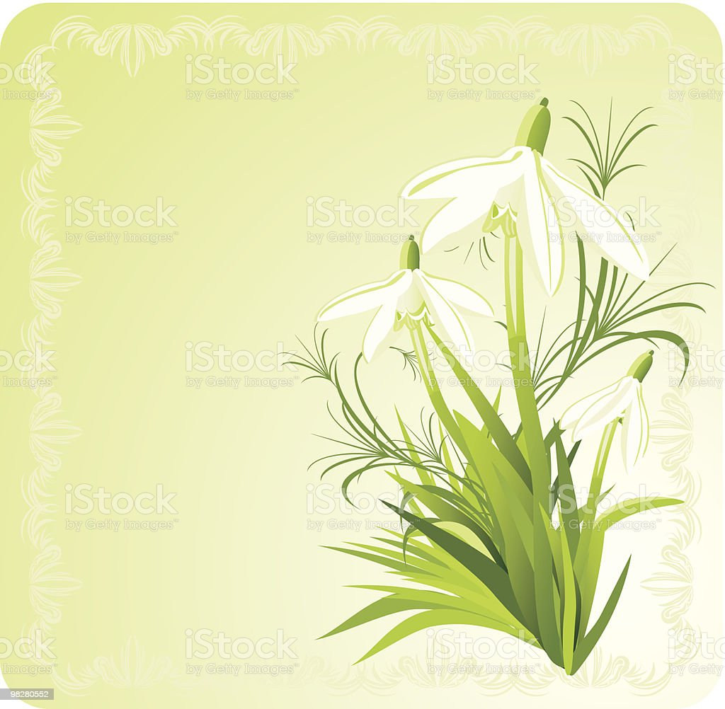 Three snowdrops. Decorative card royalty-free three snowdrops decorative card stock vector art & more images of beauty in nature