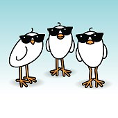 Three Cool White Chicks wearing Sunglasses Staring towards camera on Blue Background