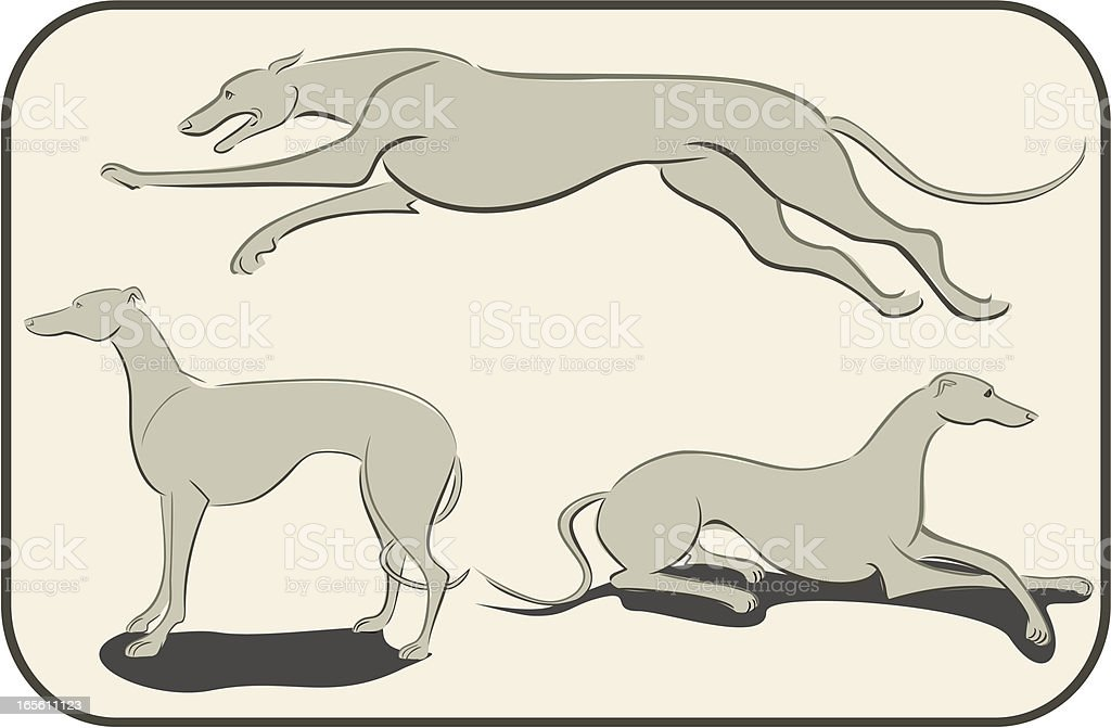 Three Studies of a Greyhound royalty-free stock vector art
