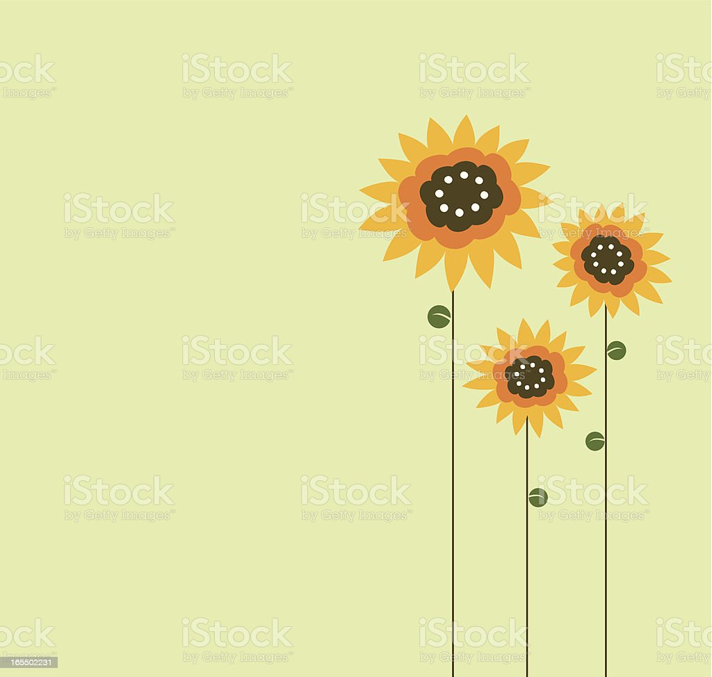 Three sunflower drawn on left side of green background vector art illustration