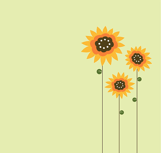 Three sunflower drawn on left side of green background vector art illustration