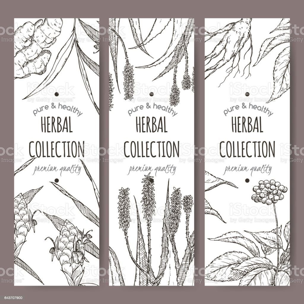 Three vector herbal tea labels with ginger, aloe and ginseng vector art illustration