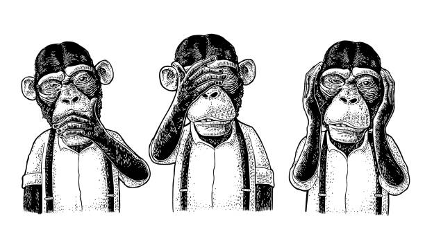 Three wise monkeys. Not see, not hear, not speak. Vintage engraving Three wise monkeys with hand on ears, eyes, mouth. Not see, not hear, not speak. Vintage black engraving illustration for poster, web, t-shirt, tattoo. Isolated on white background primate stock illustrations