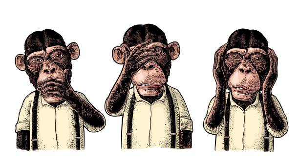 Three wise monkeys. Not see, not hear, not speak. Vintage engraving Three wise monkeys with hand on ears, eyes, mouth. Not see, not hear, not speak. Vintage color engraving illustration for poster, web, t-shirt, tattoo. Isolated on white background monkey stock illustrations