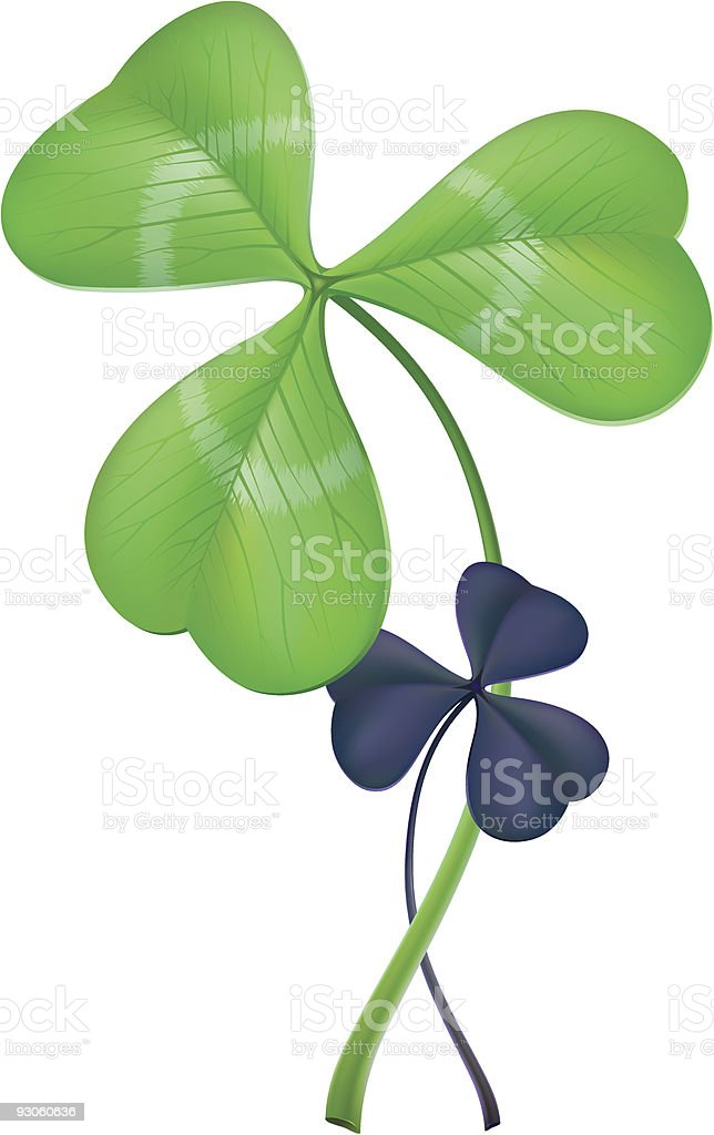 Three-leaf clover (lat. Trifolium) vector art illustration