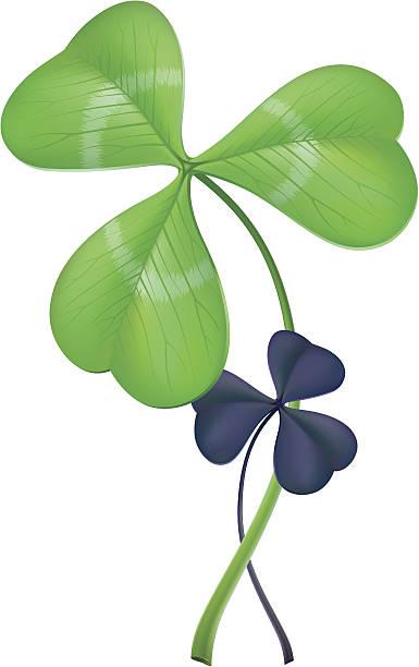 Three-leaf clover (lat. Trifolium) vector art illustration