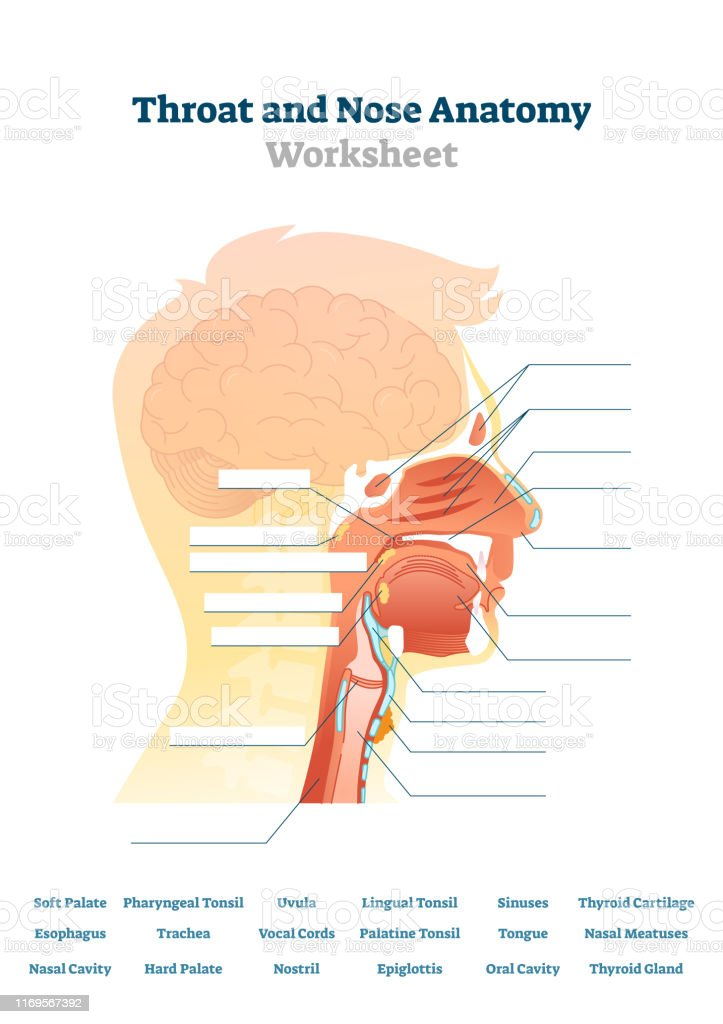 throat and nose anatomy vector illustration blank mouth thyroid gland pain blank thyroid diagram #15