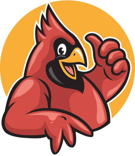 thumb up cardinal - cardinal mascot stock illustrations, clip art, cartoons, & icons