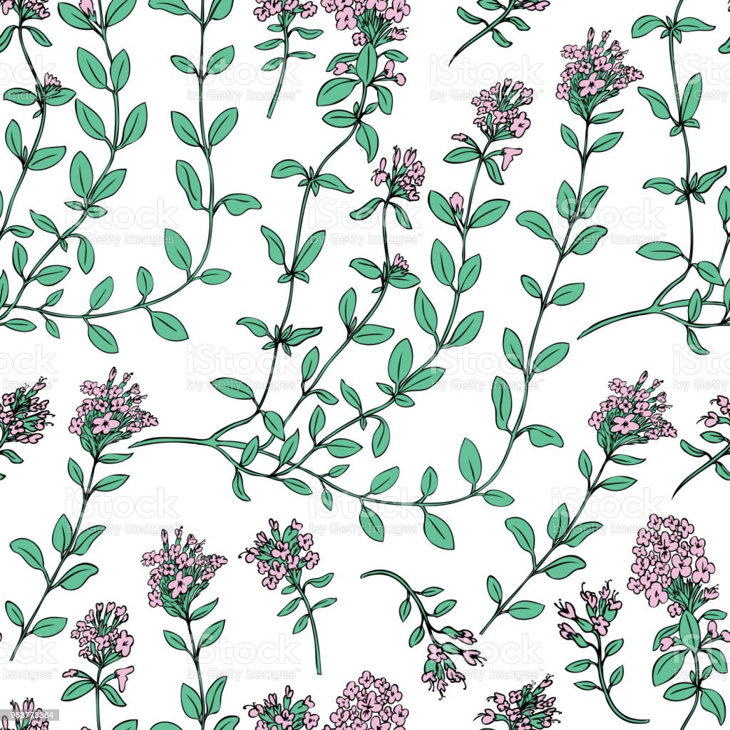 Thyme Branch Hand Drawn Vector Illustration Isolated On White ...
