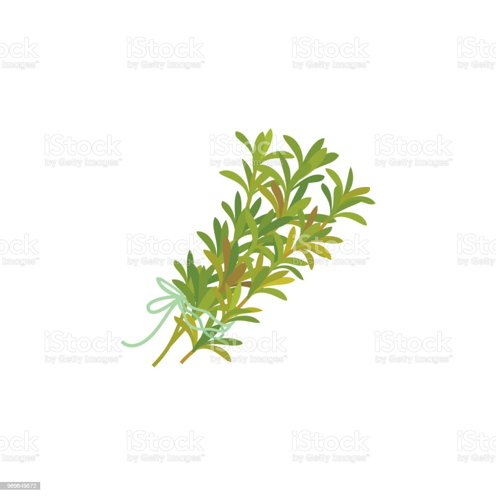 Thyme icon - Royalty-free Canada stock vector