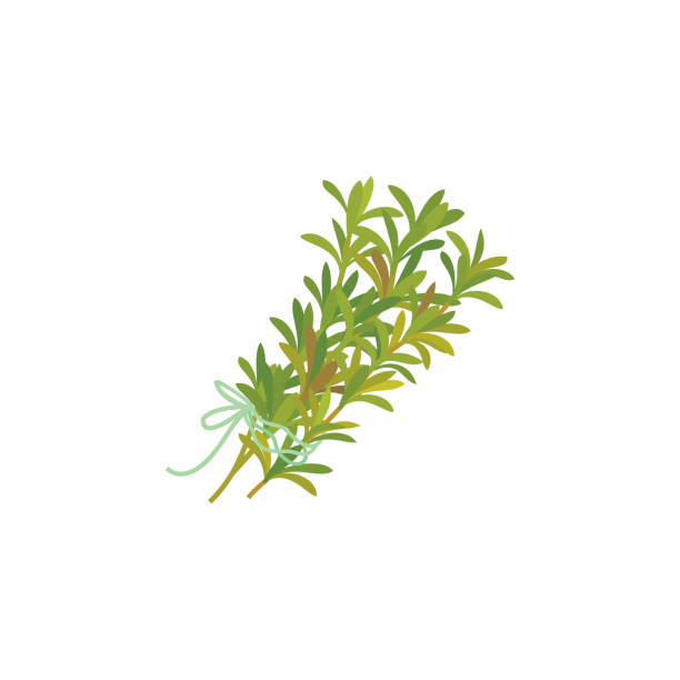 Thyme icon vector art illustration