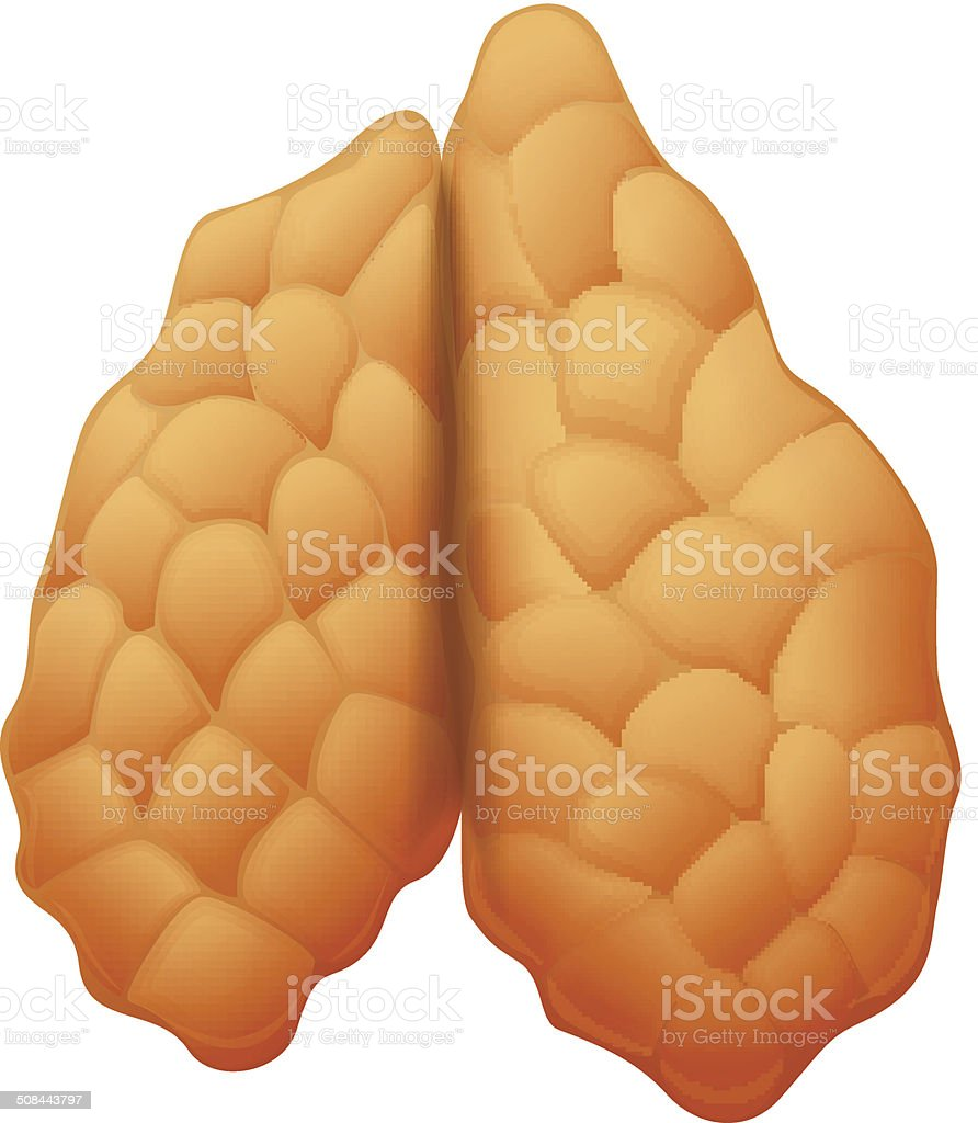 Thymus Gland Stock Vector Art More Images Of Abdomen 508443797