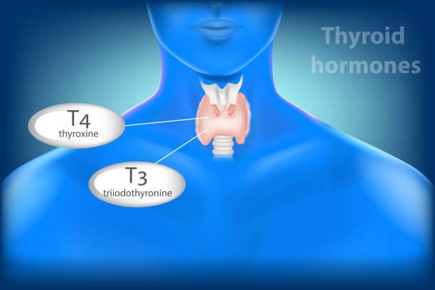ilustraciones, imágenes clip art, dibujos animados e iconos de stock de anatomía de la glándula tiroides. hormonas tiroideas - thyroxine