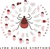 Protect yourself against ticks. Lyme disease symptoms poster. Human skin parasite. Danger for health from tick bite, borreliosis infection. Editable vector illustration in simple outline style.