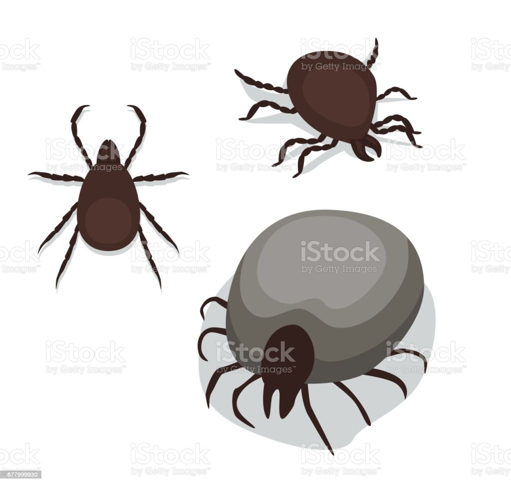 Tick Poses Cartoon Vector Illustration vector art illustration