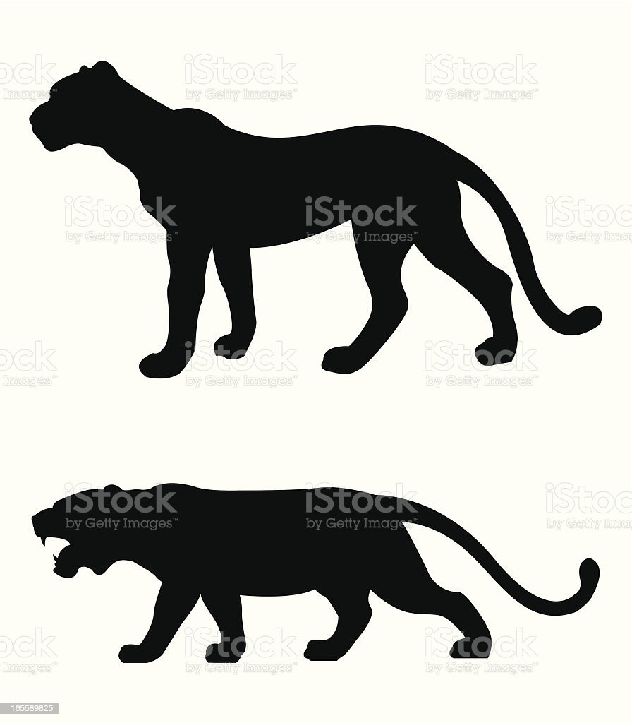 tiger and cheetah royalty-free stock vector art