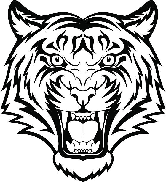 tiger anger - tiger stock illustrations, clip art, cartoons, & icons