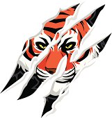 vector of tiger claw mark
